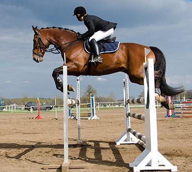 Cours chevaux à Pont-l'Évêque